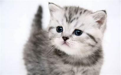 Cute Kitten Animals Cats Desktop Wallpapers Cat