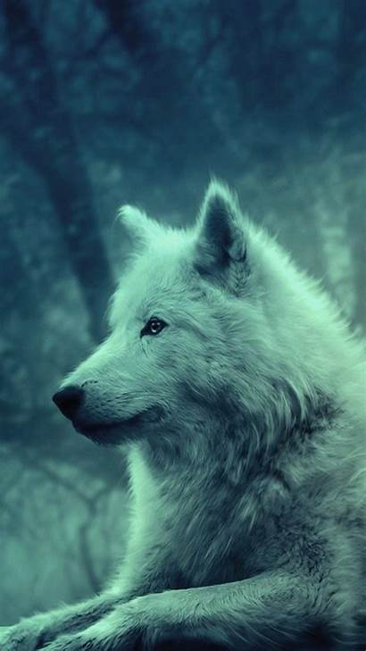 Wolf Wallpapers 2560 1440 G4 Lg Backgrounds