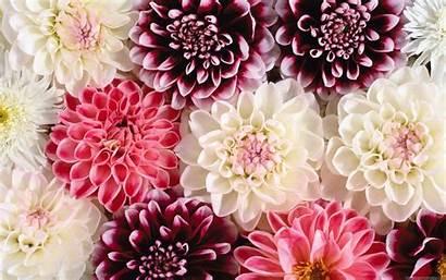 Floral Desktop Backgrounds Computer