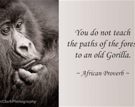gorilla quotes funny image quotes  hippoquotescom