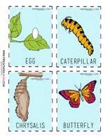 butterfly preschool printables preschool 485 | ButterflyLifeCycleCardsColor2