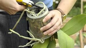 Orchideen Umtopfen Video : orchideen umtopfen so geht 39 s youtube ~ Watch28wear.com Haus und Dekorationen