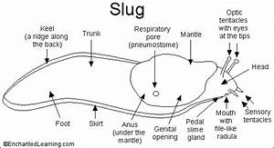 Why Do Some Slugs