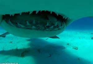 Hammerhead Sharks Eating People | www.pixshark.com ...