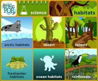 The place or environment where a plant or animal naturally or normally lives and grows. Habitat Activities and Lesson Ideas with a FREEBIE- hands ...
