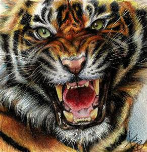 Tiger by Andreabengeart on DeviantArt
