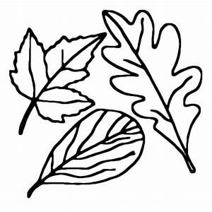 Feuilles D Automne à Imprimer : coloriage feuille d 39 automne dessin 3 tap feuille automne dessin automne et coloriage automne ~ Nature-et-papiers.com Idées de Décoration