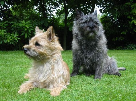 Filecairn  Ee  Terrier Ee   Garten Jpg