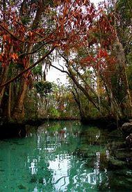 Three Sisters Springs Florida