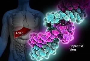 19 Hepatitis C ... Hepatitis C