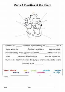 Sen Heart Labelling And Function Gap Task   Extension