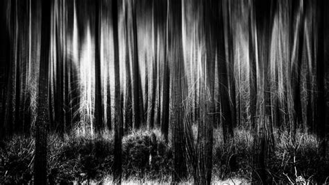 Wallpaper Hd Black And White by Wallpaper Wiki Hd Black And White Forest Background Pic