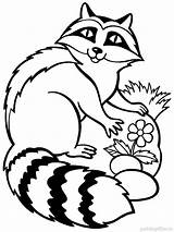 Raccoon Coloring Pages Drawing Animal Face Racoon Animals Template Printable Marine Colors Enot Getdrawings Clipartmag Mycoloring Recommended sketch template