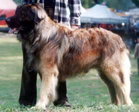 Cfa What Does It Stand For by Leonberger Redorbit