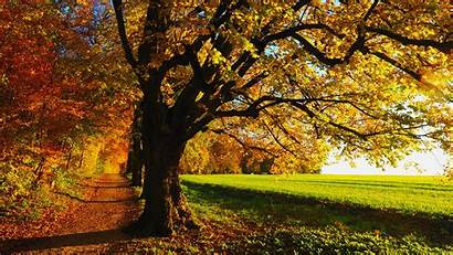 Fall Scenery 1080p Wallpapers Backgrounds Nature Wood