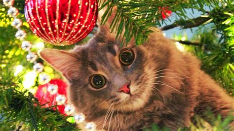cats love christmas trees compilation  youtube