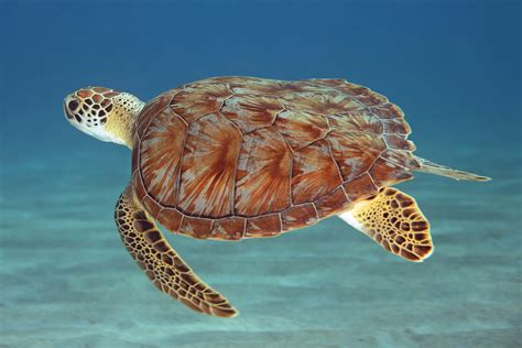 Images Of Turtles Turtle The Enthusiast