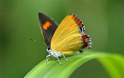 Butterfly Desktop Wallpapers Wallpapersafari