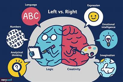 Brain Left Right Vs Dominance Brained Theory