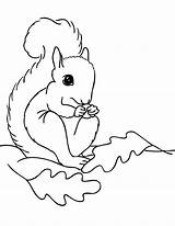 Squirrel Coloring Pages Preschool Printable Drawing Clipart Cliparts Animals Fall Line Animal Clip Books Dog Visit Library Popular sketch template