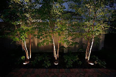 Landscape Up Lighting  Lighting Ideas