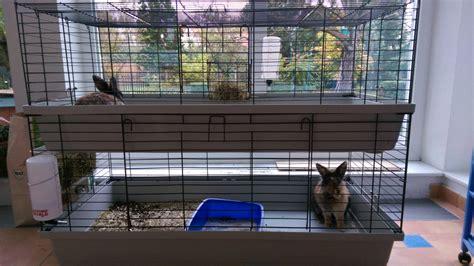 kaninchen haltung fragen tiere