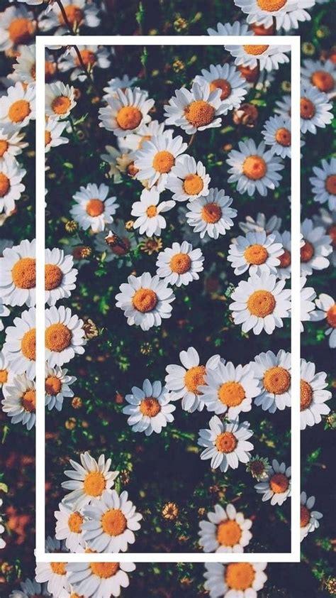 wallpaper margarita
