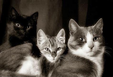 cats tres gats    photoblog black