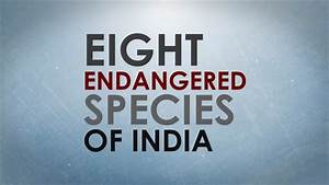 resume writing service media pa extinction of animal species essay extinction of animal species essay