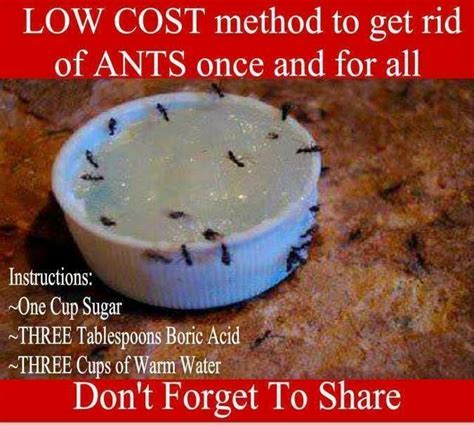 getting rid of ants 17 best images about repelents on pinterest roaches homemade and ants