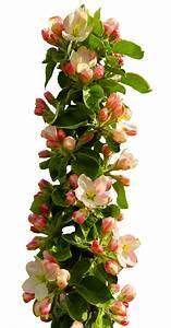 Spring Flower PNG Transparent Image - PngPix