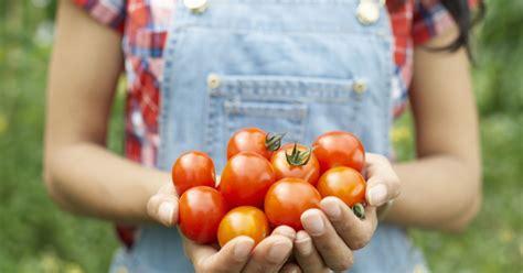 comment cuisiner des tomates voici la meilleure façon de cuisiner des tomates terrafemina