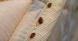 according to experts most public buildings in montreal With bed bugs montreal