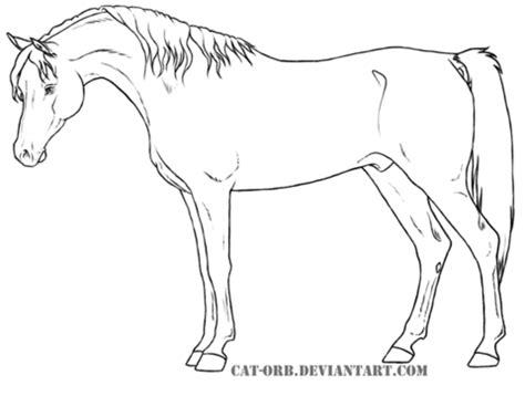foto de Kolorowanka Egipski koń arabski Kolorowanki dla dzieci
