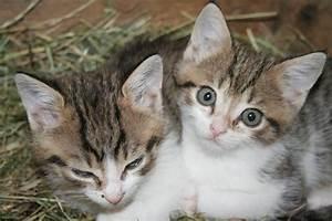 Rasengittersteine Zu Verschenken : babykatzen zu verschenken 847217 ~ Michelbontemps.com Haus und Dekorationen