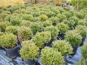 Bäume Für Trockenen Boden : die besten pflanzen f r sonnigen standort im garten ~ Lizthompson.info Haus und Dekorationen