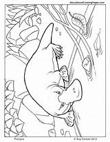 Platypus Coloring Perry Pages Colouring Popular sketch template