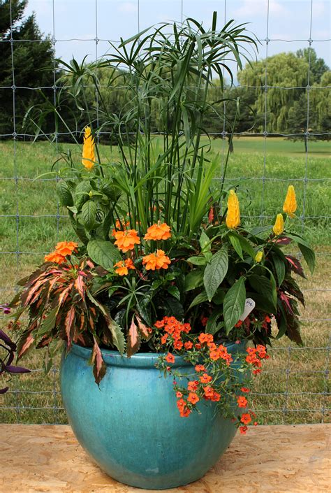Gardening In Containers On Pinterest  Container Garden
