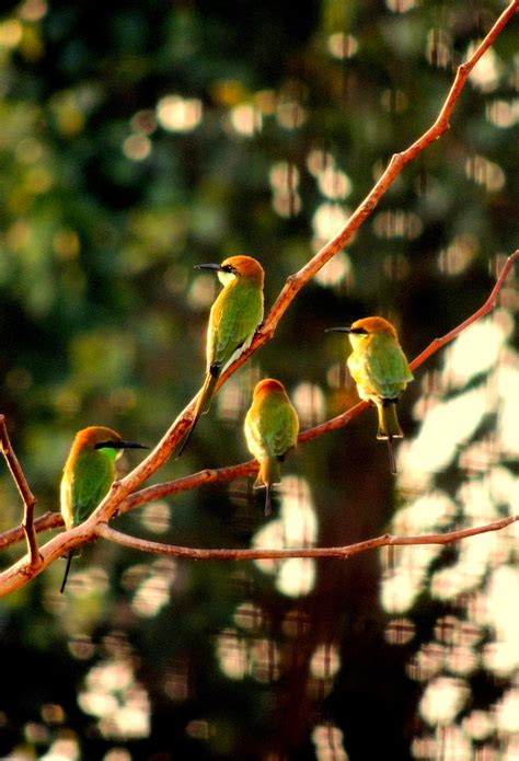 Goria Birds 3wallpapers Iphone Parallax Wallpaper For