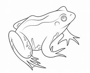 Cartoon Amphibian Frog Coloring Page - Poison Dart Frog ...