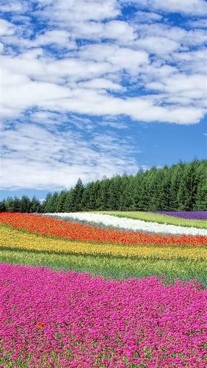Iphone Spring Summer Wallpapers Backgrounds 6s Garden
