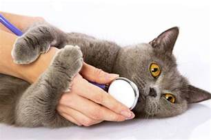 cat clinic hobarts cat clinic is an exclusive cat only vet hospital
