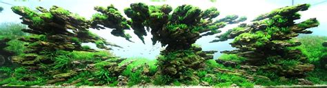 The Best Aquascape by The Underwater Of Competitive Aquascaping
