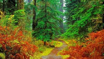 Forest Wallpapers Resolution Nature Desktop Fall Trees