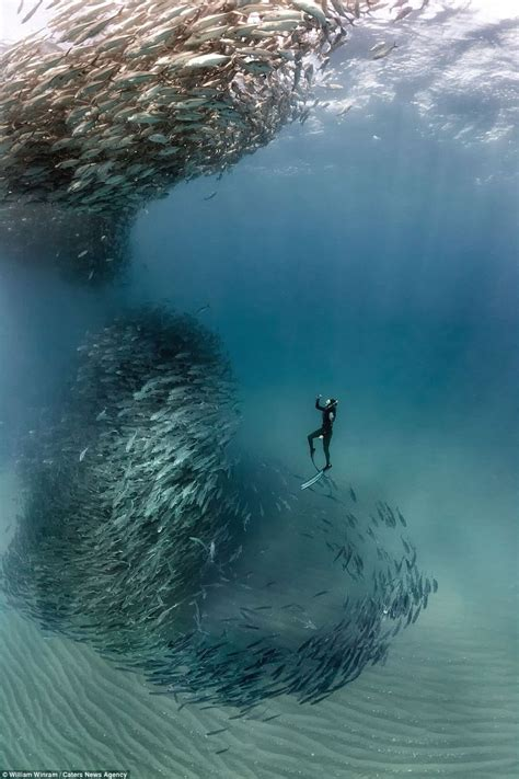 Incredible photographs show a school of fish forming a ...