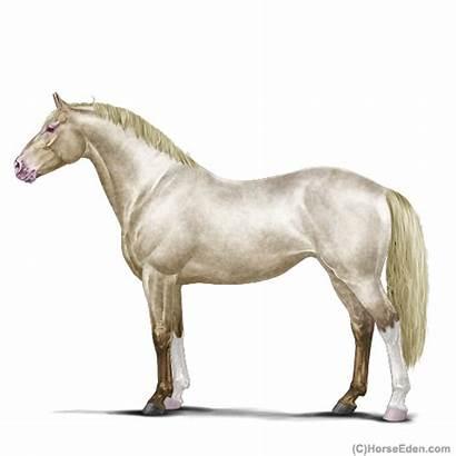 Horse Horseeden Eden Eep