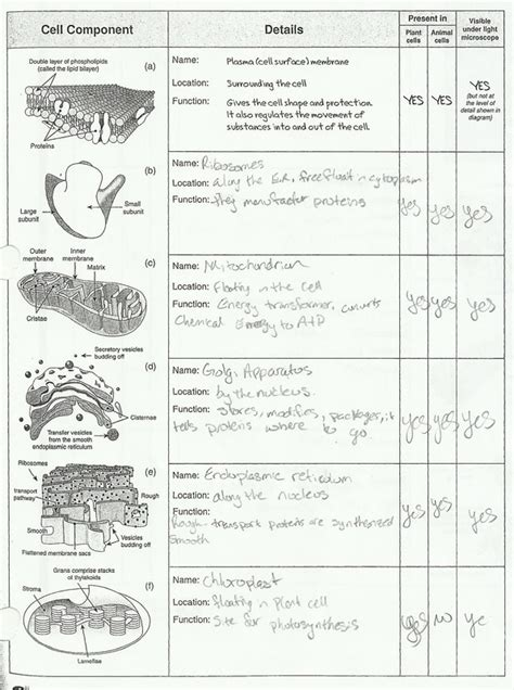 49 cell structure worksheet eukaryotic cell structure
