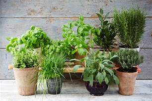 small kitchen diner ideas the ultimate guide to growing herbs oliver features