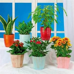 Grünpflanzen Im Topf : sommer mix im topf von aldi nord ansehen ~ Michelbontemps.com Haus und Dekorationen