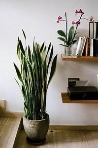 Zimmerpflanzen Für Schlafzimmer : zimmergr npflanzen bilder und inspirierende deko ideen ~ A.2002-acura-tl-radio.info Haus und Dekorationen